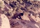 ارسالي ابراهيم ملك لو_89